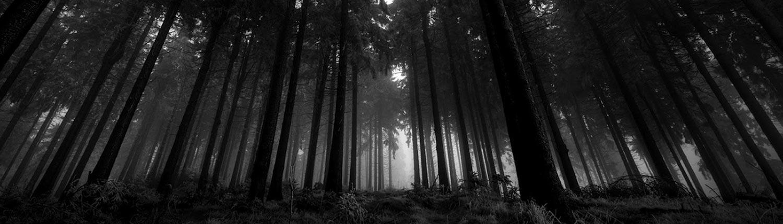 Ciemny las